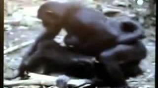 l omosessualitá é naturale documentario sulla vita animale
