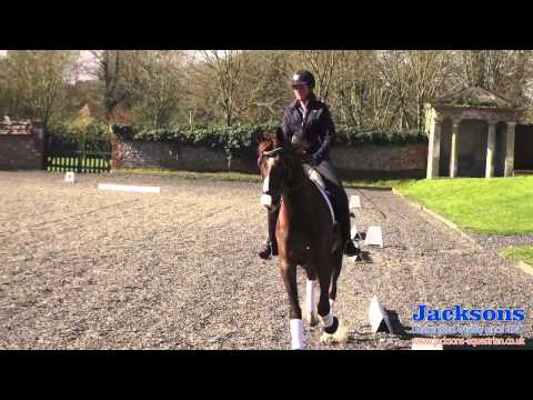 Anna RossDavies  helps guide you through the basics of the working trot