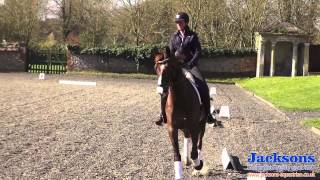Anna Ross-Davies - Helps Guide You Through The Basics Of The Working Trot