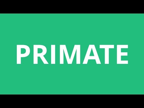 How To Pronounce Primate - Pronunciation Academy