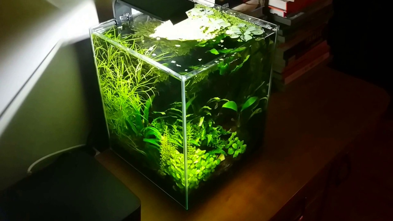 058 little green cube nano aquarium 30l youtube. Black Bedroom Furniture Sets. Home Design Ideas