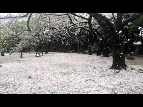 Snow in Shinjuku Gyoen