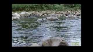 Appalachian Mountain Home YouTube