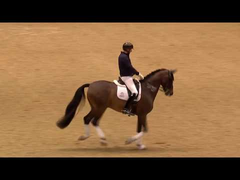 Dressage Unwrapped - 2019 Olympia, The London International Horse Show
