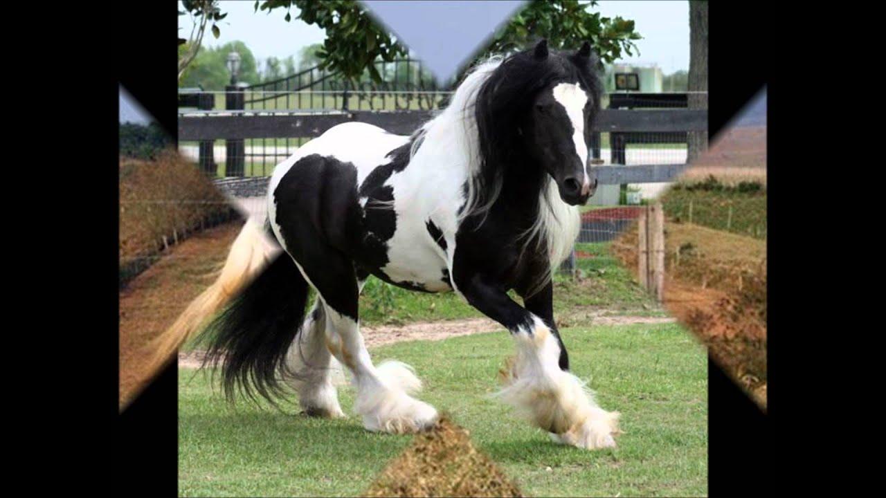 los caballos 18 Caballos pintos  YouTube