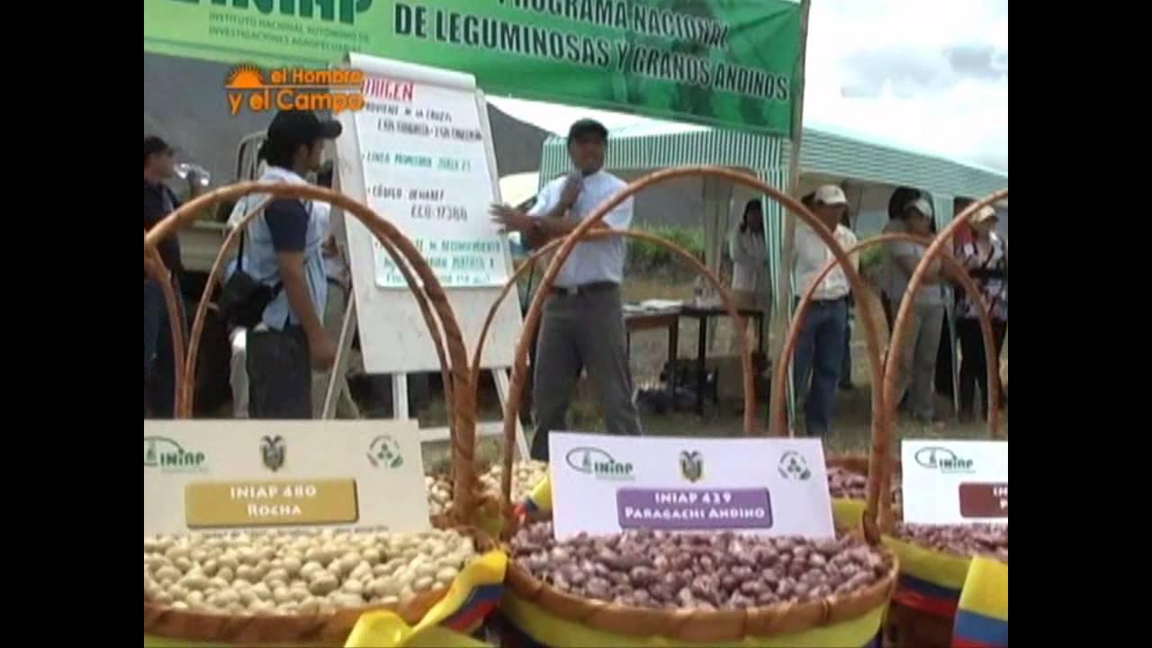 Download Cultivo del fréjol en el Ecuador   Periódico ElProductor.com