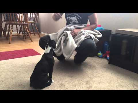 How to Stop Puppy Dangerous Biting and Growling Part 1