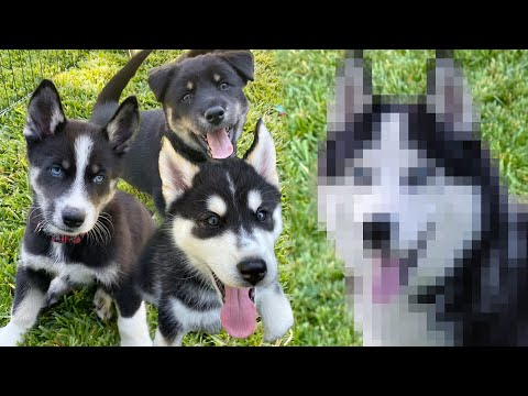 The Puppies Meet Their Real Mother! | Mister Preda