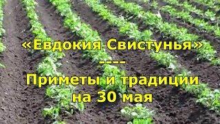 Народный праздник «Евдокия Свистунья»  Приметы и традиции на 30 мая
