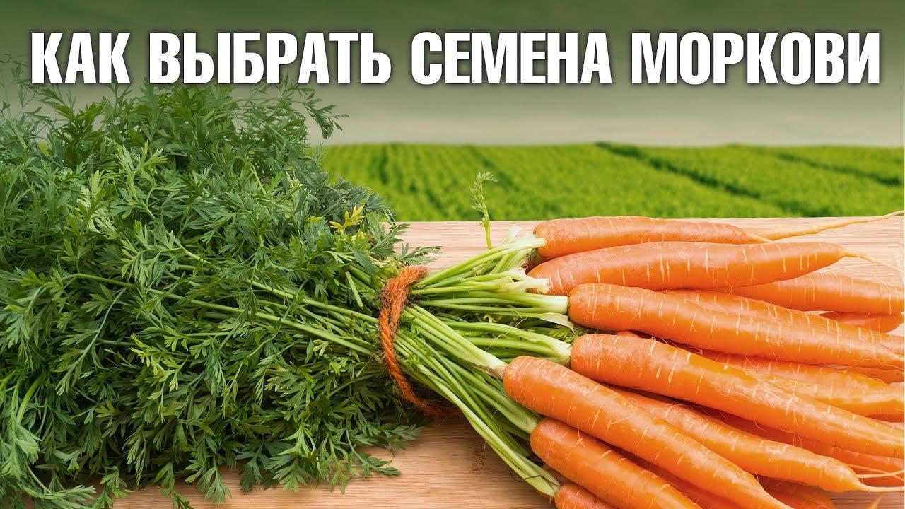Семена моркови - как выбрать лучшие сорта для салатов или хранения на зиму?