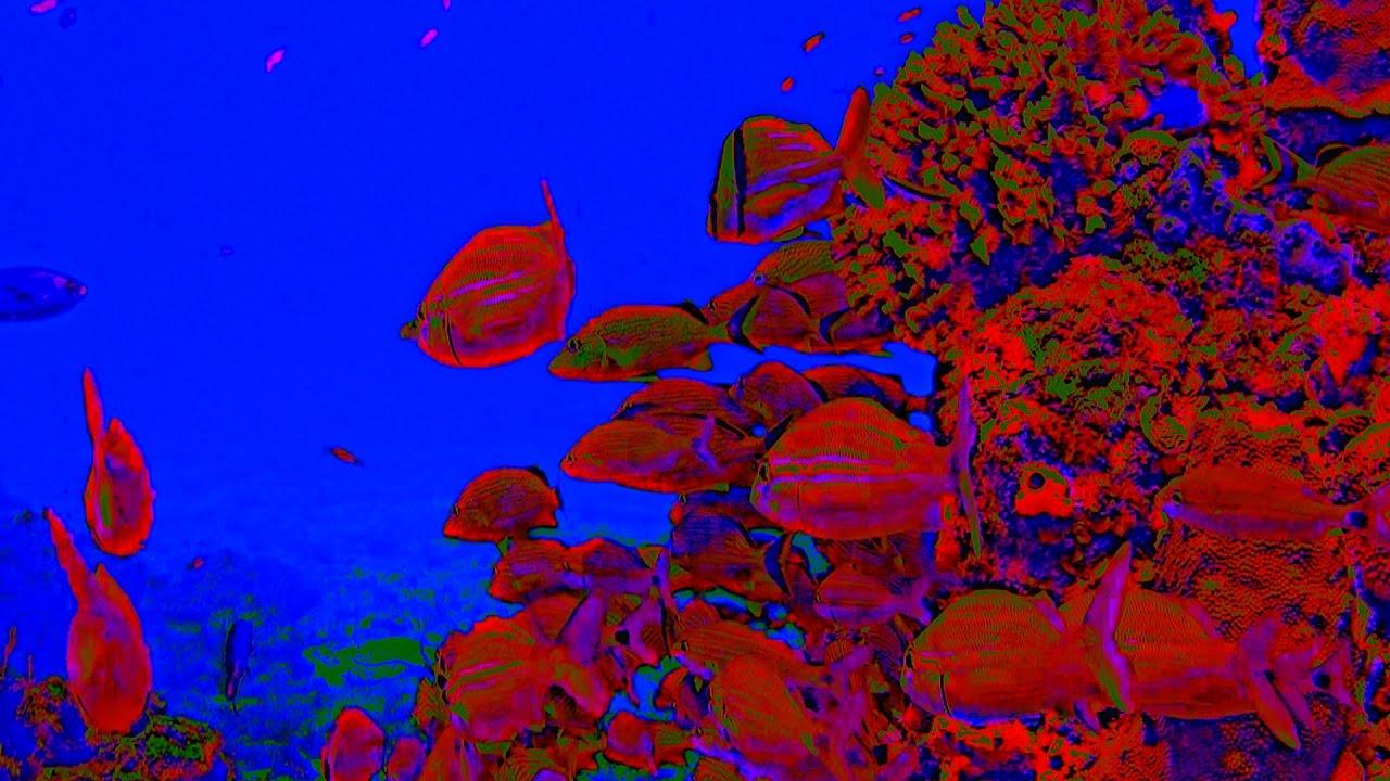 Grateful Dead Under Psychedelic Seas Scarlet Begonias 2d 4k