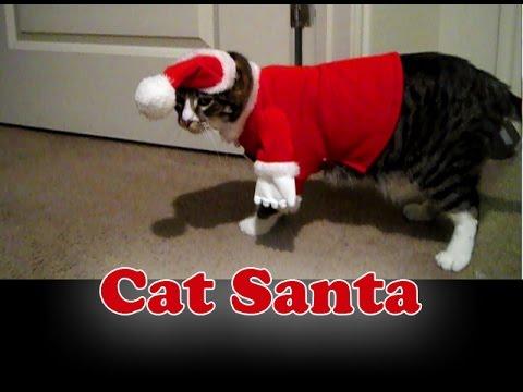 Cat In The Hat Walks In