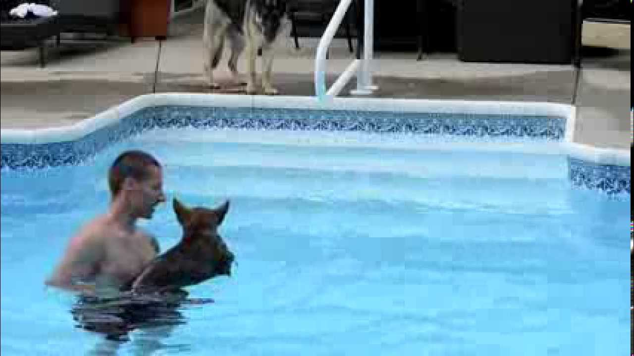 German Shepherd Puppy Swimming First Time Youtube