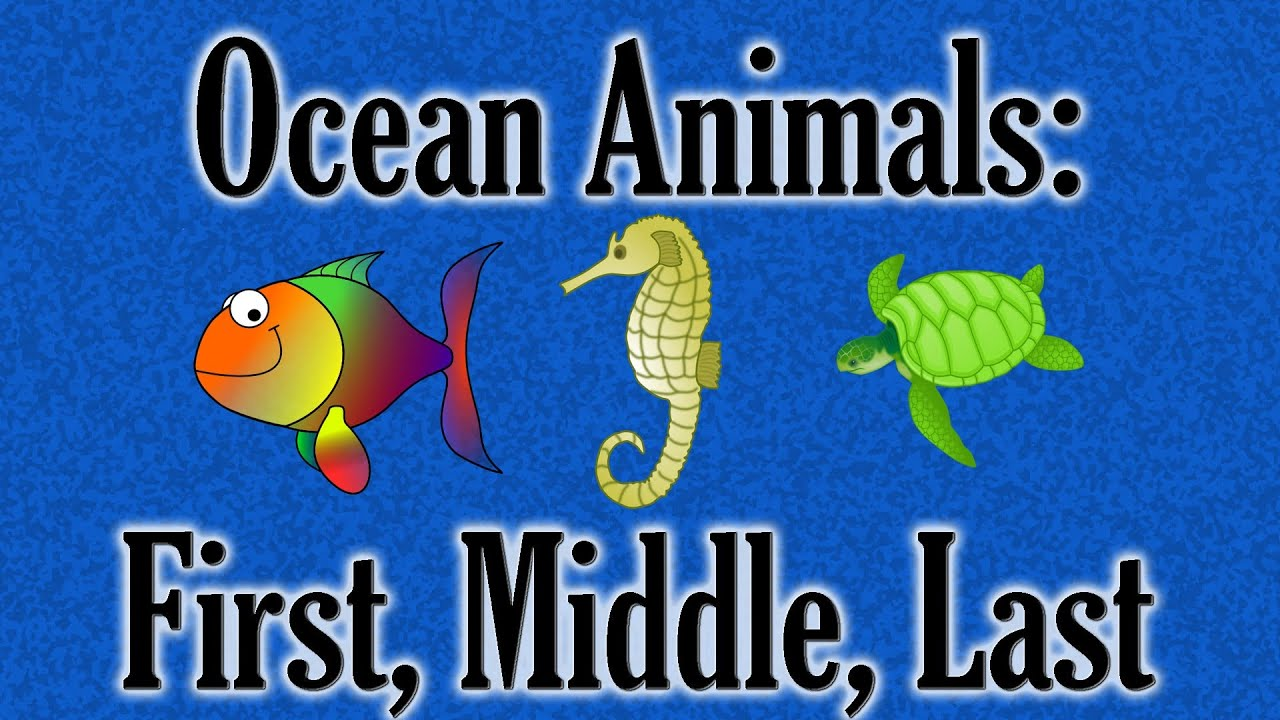 ocean animals first middle last preschool game youtube