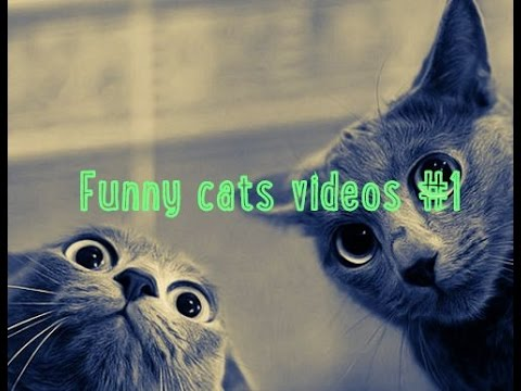 Scared cat .Funny cats videos #1