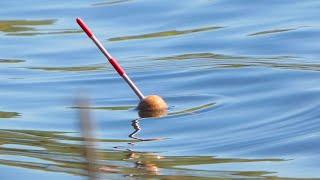 Рыбалка в мае ловля плотвы на поплавок