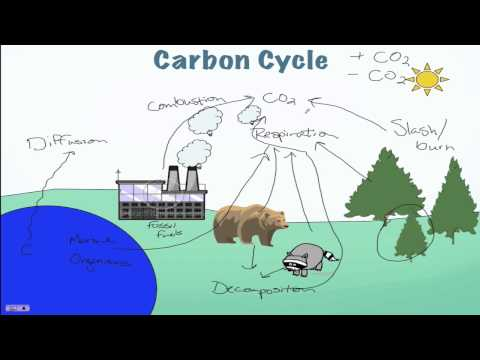 Carbon Cycle Processes
