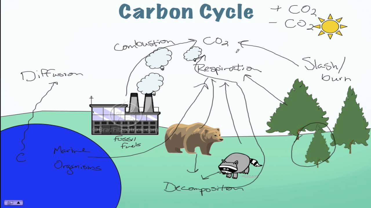 Carbon cycle processes youtube carbon cycle processes ccuart Images