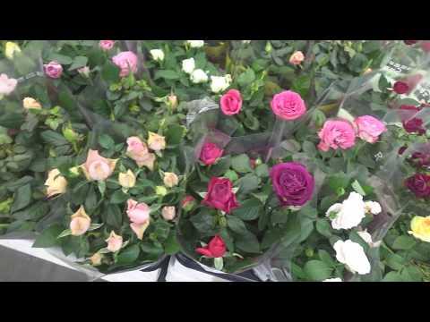 Цветущие растения в Леруа Мерлен
