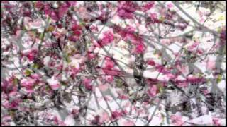 Mei Hua 梅 花(plum flower in the snow)