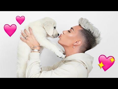 Adopting A Puppy!!
