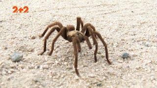 Небезпечні тварини, що живуть в Австралії