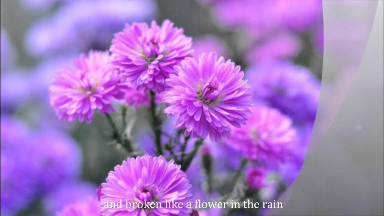 Flower In The Rain By Jaci Velasquez With Lyrics Youtube