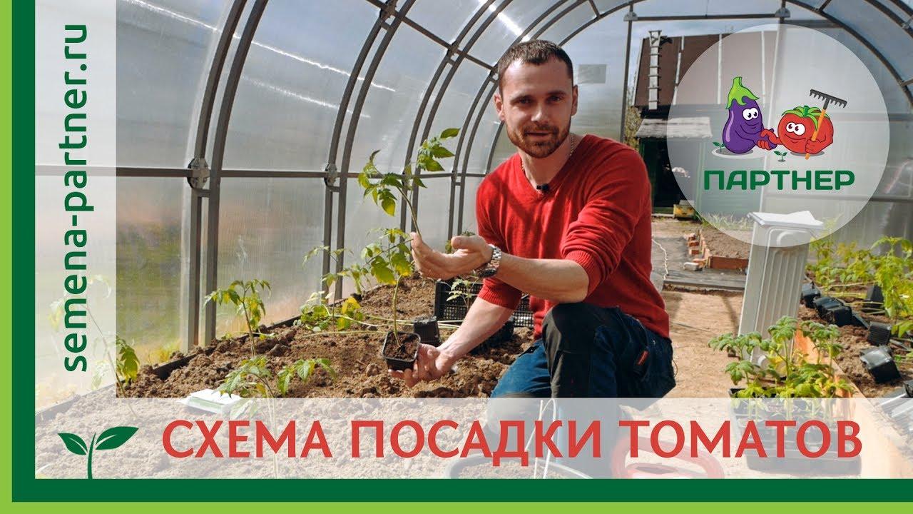 Уход за томатами до цветения. Чем подкормить , профилактика .