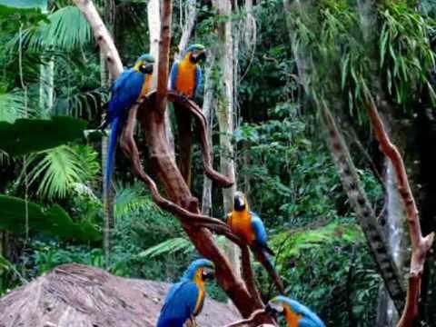 Parque de las aves foz de iguaz wmv youtube for Bazzel el jardin de los secretos