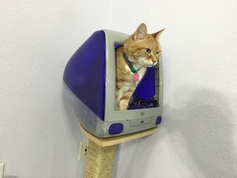 Build an iMac G3 cat house