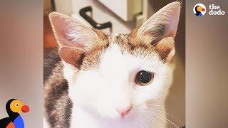 Cat With 4 Ears Loves Helping Foster Kittens - FRANKENKITTEN | The Dodo