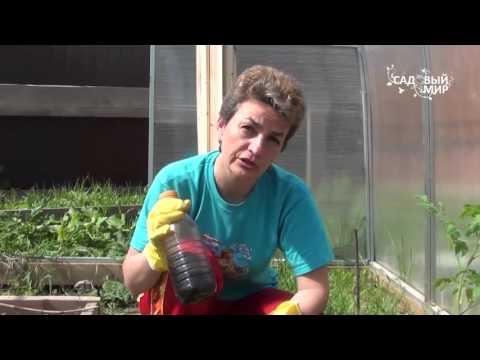 """Как сажать рассаду в теплицу. Сайт """"Садовый мир"""""""