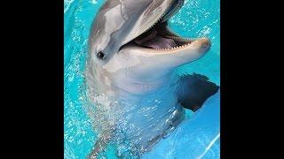 Сочи.Дельфинарий.Шоу дельфинов.Лето