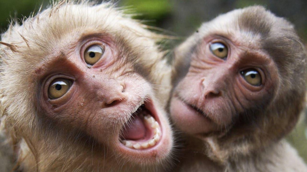 Affen Lustige Bilder
