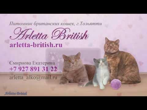 Британские кошки. Британские котята. Продажа британских котят. Питомник  Arletta British.