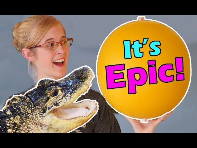 our-alligator-gets-a-new-toy