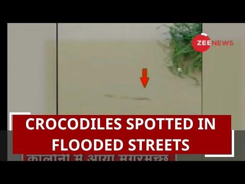 Gujarat Floods: Crocodiles prowl in waterlogged street in Vadodara