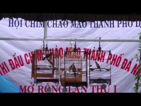 Hội thi chào mào Đà Nẵng mở rộng 2011 (vòng chung kết)