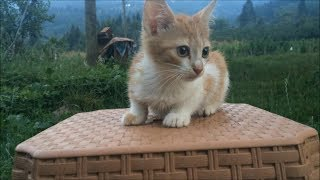 Clueless kitten