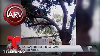 Pareja asegura captar duende en el patio de su casa | Al Rojo Vivo | Telemundo