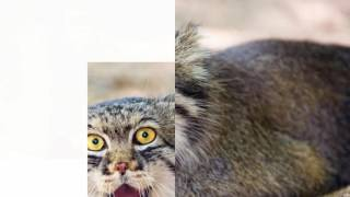 ТОП 10 ЛУЧШИХ. РЕДКИЕ ЖИВОТНЫЕ Животный мир. Интересное фото Смешные видео 2016