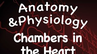 Cardiovascular System : Chambers in the Heart (14:03)