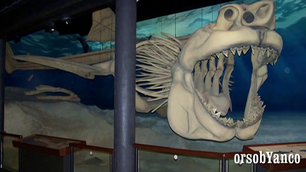 Il Megalodonte Carcharodon Megalodon Youtube