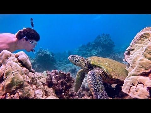 Freediving With Sea Turtles In Maui Hawaii Gopro