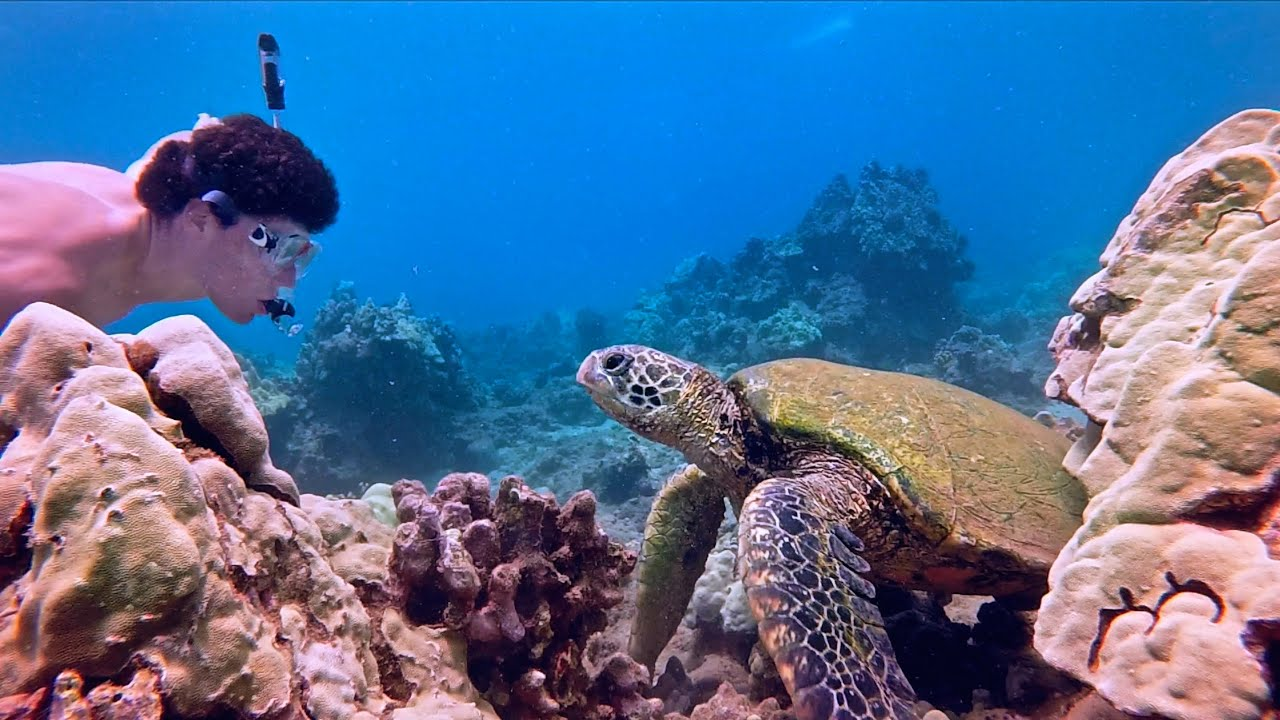 snorkeling with sea turtles in maui hawaii gopro youtube