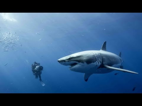 Jaws 18 скачать торрент - фото 3