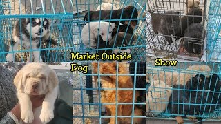Dog Market Outside Dog Show 2020   Cheapest Dog Market   Wholesale Dog Market At Karnal