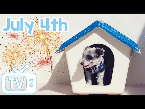 4th of July TV for Dogs! Keep Your Dog Calm and Chilled on July 4th with this TV with Relaxing Music