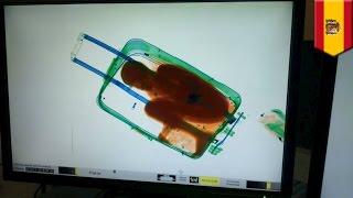 8歳児がスーツケースで密入国を試みるが…