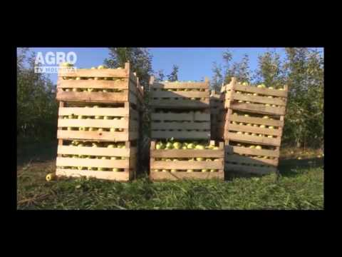 Moldova majorează exporturile de mere în Kazahstan